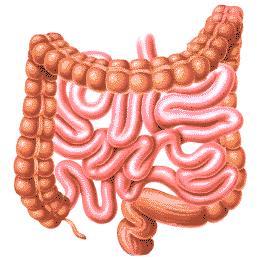 Enzymy a trawienie, detoksykacja
